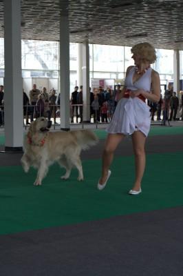 Необыкновенно красивыми и интересными вам кажутся танцы с собакой? Тогда загляните в раздел «фристайл». Вы сможете познакомиться с удивительными танцевальными дуэтами, узнаете о том, как этому научиться самим.