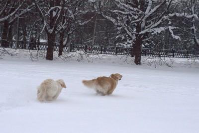 Пришло время отдыха. На улице зима, все белым бело. К нашей дружной, веселой компании присоединился наш друг Умка.
