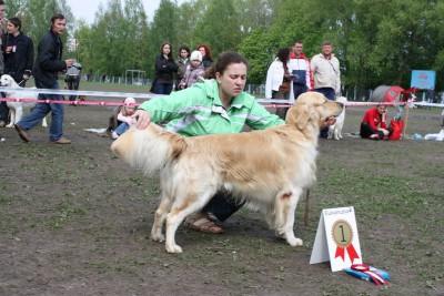 9 мая 2010 года, Минск. Чемпионат голден ретриверов. Победитель в «рабочем» классе. Хэндлер: Дарья Милашевская