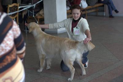 Впервые на выставке.  Молодечно, 16.03.2008. Лучший щенок-кобель.