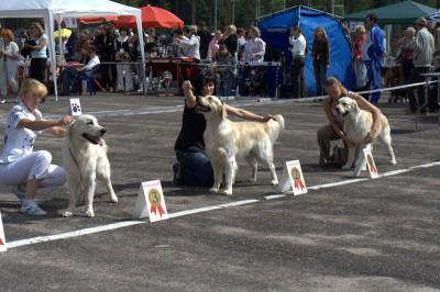 Международная выставка собак всех пород ранга CACIB 20.07.2008, 2-е место, класс юниоров