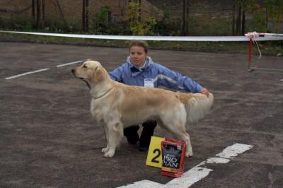 Региональная выставка собак всех пород, 5 октября 2008 года, Кинологическое общественное объединение. Победитель класса «победители», лучший кобель породы, лучший представитель породы, 2-е место в 8-й группе пород FCI