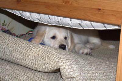 Мое любимое место под детской кроваткой.
