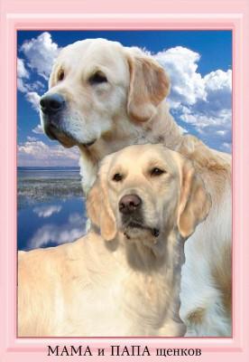 29 июля 2011 года в питомнике появились первые щенки золотистых ретриверов.