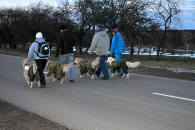 Эти знания являются основой для обучения собаки. Только освоив их, можно приступать к следующим командам.