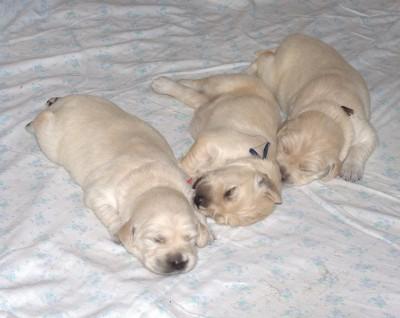 Очень люблю с детства поспать в компании...