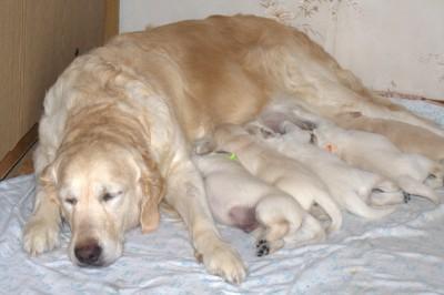 А пока спит мама, мы можем и покушать.