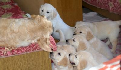 Мама, вставай! Мы есть хотим!