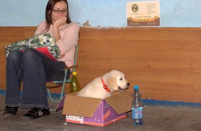 Если будующие хозяева не хотят искать Бониту, она сама их решила найти на выставке собак.