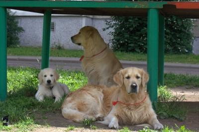 Кеша и Лучик вместе с Беней ждут его хозяина.