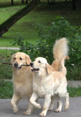 Сладкая парочка- Лучик и Бондик.