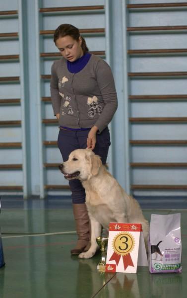 Под экспертизой Вячеслава Вербицкого лучший щенок породы, 3 место за звание лучший щенок выставки.