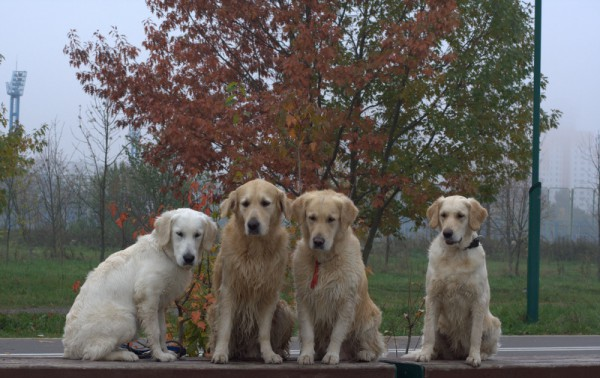 С новыми и старыми друзьями на прогулке.