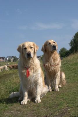 Кеша с Лучиком как всегда, вместе, наблюдают за гостями.