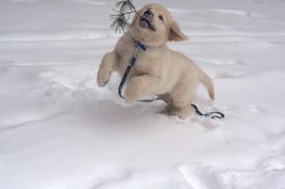Как же здорово зима, снег и много так вокруг интересного…