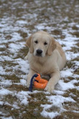 Не только умница, но и красавица! Самый обаятельный щенок, не смотря на немного грустный взгляд.