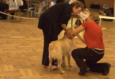 Первая выставка 28 апреля 2012 г. Минск Эксперт ринга:  Захарова Галина