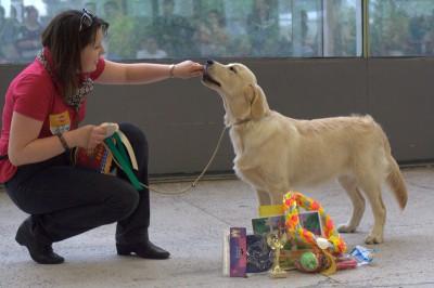И вот она победа! Большая перспектива, лучший щенок по полу, лучший щенок породы! И много, много подарков.