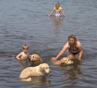 Ох, и жаркий выдался денек в этот день! Под 30 градусов. Для ретриверов нет большего удовольствия, чем плавание в водоеме. А когда хозяева рядом, то это счастье вдвойне!