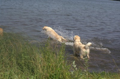 А вот Чарлику и Бонни больше пришлось по душе- поплавать за игрушками.