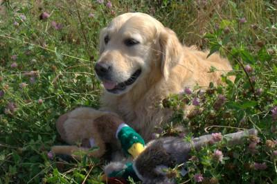 Очень доволен был Кеша своими пернатыми подарками. Еще раз огромное спасибо. Это его любимые игрушки!