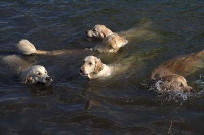 В такой жаркий день прохладная водичка только в удовольствие!
