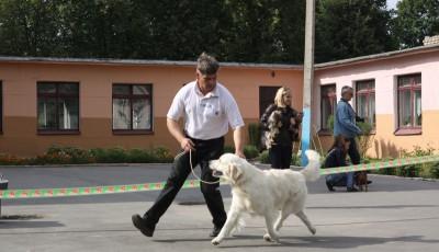 Хэндлер Романов Владимир, очень гордится победой , так как все собаки выставленные в этом классе получили наивысшие оценки.
