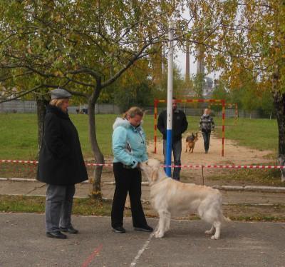 Экспертизу проводила эксперт международной категории Л. Чистякова (Россия)