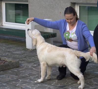 Дарлингтон Мое Сокровище - лучший щенок-кобель, 1-е место