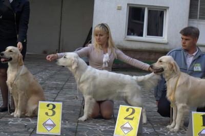 Слева направо: Голден Адамант Ясента Элис - отлично, 3-е место; Еввива Каролина Вланти Делимар - отлично, 2-е место