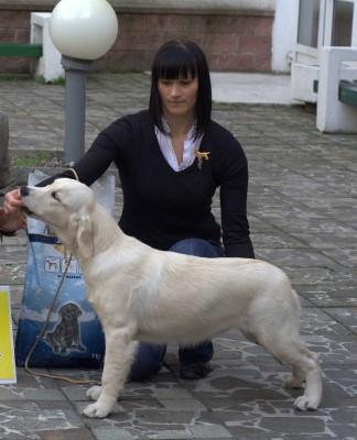 Дерри Мое Сокровище - большая перспектива, 1-е место,  лучший щенок породы