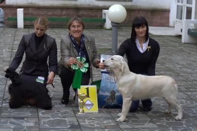 Лучшим среди щенков выставки стала Дерри Мое Сокровище. 2-е место - щенок американского кокер-спаниеля