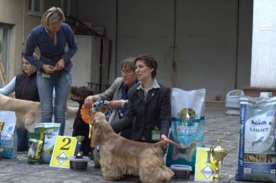 Расстановка на конкурсе за звание лучшей собаки выставки