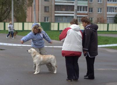Под экспертизой эксперта международной категории Е. Булелек (Беларусь) Барон Мюнхгаузен получил наивысшую оценку: большая перспектива, лучший щенок-кобель, лучший щенок породы