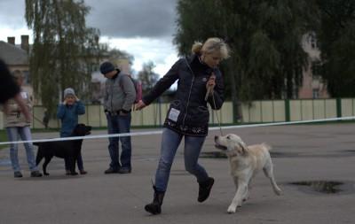 На выставке Международного Кинологического Союза, под экспертизой эксперта международной категории Вячеслава Вербицкого получил наивысшую оценку: большая перспектива, лучший щенок кобель, лучший щенок породы.
