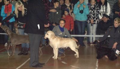 На заключительном конкурсе за звание «лучший щенок выставки»