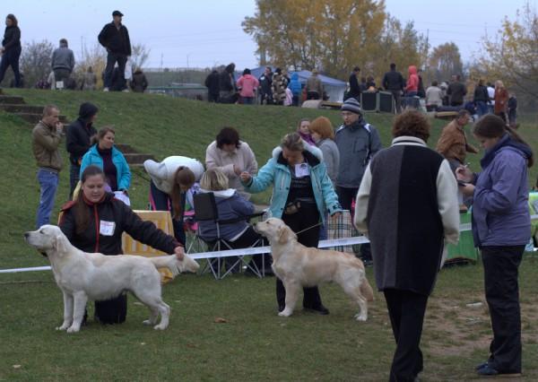 Слева направо: Дарлингтон Мое Сокровище - большая перспектива, 1-е место, лучший щенок-кобель, лучший щенок породы; Золотой Охотник Бакс Банни - большая перспектива, 2-е место