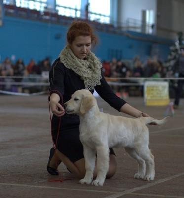 Антарес Ластер Голд (Беларусь). Большая перспектива, лучшая беби-сука, лучший беби породы
