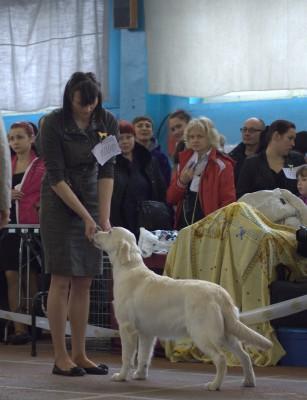 Донахади Мое Сокровище (Беларусь). Большая перспектива, 1-е место, лучшая сука-щенок, лучший щенок породы