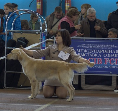 Голдент Адамант Ясента Элис (Беларусь). Очень хорошо, 2-е место