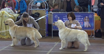 Слева направо: RIERA BYRON BAY (Россия) - отлично, 1-е место, САС; Ладвил Амати Дугл (Беларусь) – отлично, 2-е место
