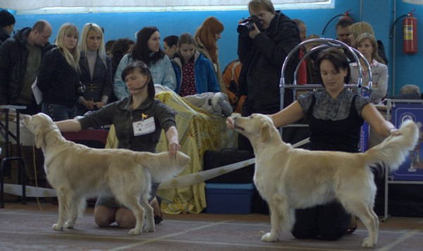Слева напаво: SANIRA VERO (Беларусь)- отлично  TESORO KATIVAL (Украина) отлично 1 САС