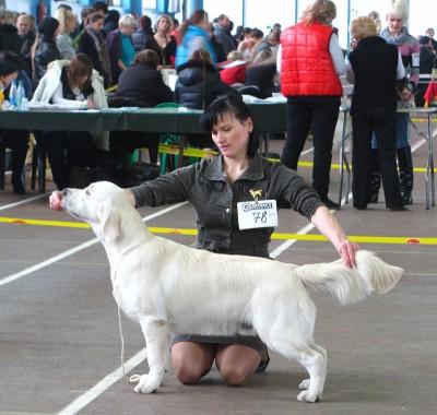 Дартфорд Мое Сокровище - большая перспектива, лучший щенок кобель, лучший щенок породы