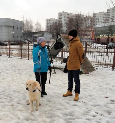 В сутки средняя собака должна проходить около 5 км