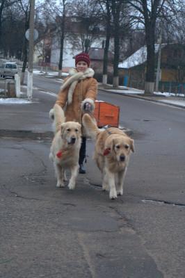 Хорошо обученной собакой может управлять даже ребенок - не важно, какого она размера и веса