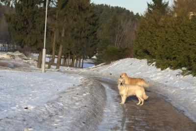 Собака знает, что если она будет слушаться, то человек возьмет ее с собой туда, где она еще не была