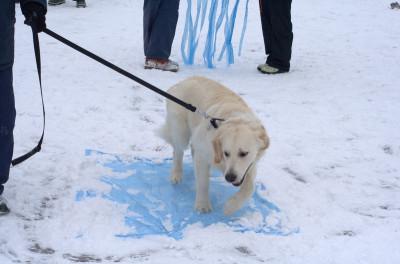 Очень важно научить ходить собаку по разной поверхности