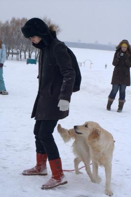 Для тренировки вам потребуется помощник. Оставив с ним собаку, перейдите на другую сторону от препятствия. Наклонившись, позовите собаку к себе. Нависающий предмет (мы использовали полотенце) должен находиться так низко, чтобы вынудить собаку преодолеть его практически проползая под ним. Может быть использован в этих целях низко установленная палка либо забор. Таким образом, отрабатывается команда «ползи».