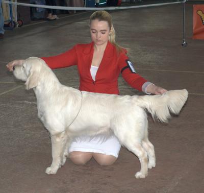 Ладвил Вивьен- ли Виваче (Россия)- отлично  1 место, САС, лучшая сука юниор, лучший юниор породы