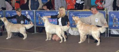 Слева направо: PALLADA IZ SOKOLINOGO GNEZDA (Украина), Еввива Каролина Вланти Делимар (Беларусь), Золотой Охотник Ариадна Астерион (Беларусь)